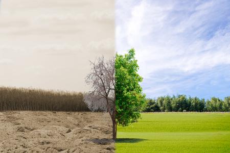 Ökologiekonzept Baum Wald Dürre und Wald erfrischend