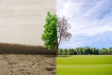 Ecology concept change tree forest drought and forest refreshing Stock Photo