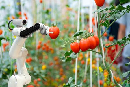 Agricultores robóticos inteligentes en la agricultura Automatización de robots futuristas para trabajar para rociar fertilizantes químicos o aumentar la eficiencia