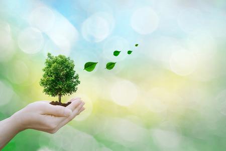 Menschliche Hände des Ökologiekonzepts, die große Pflanzenbaumblätter mit auf unscharfem Hintergrund Weltumwelt halten Standard-Bild