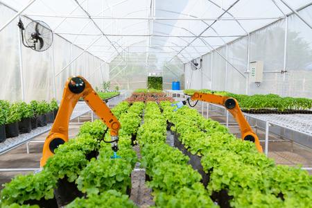Los agricultores robóticos inteligentes cosechan en la agricultura la automatización de robots futuristas para trabajar la tecnología aumenta la eficiencia