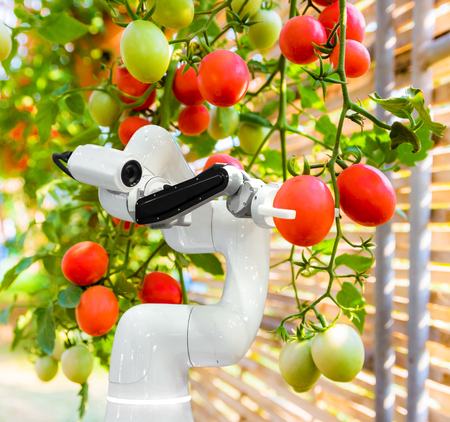 Smart robotic farmers harvest in agriculture futuristic robot automation to work technology increase efficiency Archivio Fotografico - 118125903