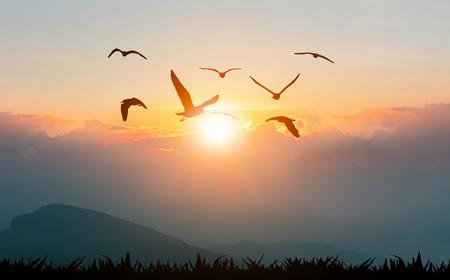 Oiseaux volant la liberté sur les montagnes et la silhouette du soleil