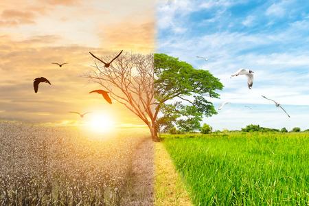 Concepto de ecología cambio de medio ambiente bosque de árboles sequía y bosque de aves voladoras refrescante