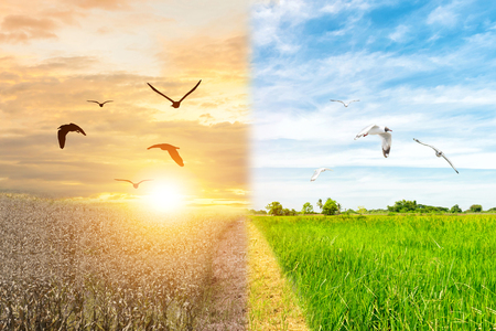 Ecology concept environment change forest drought and flying bird forest refreshing