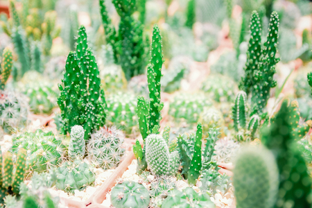Farm cactus to plant variety of species Banco de Imagens - 124531616