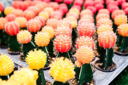 Farm cactus to plant variety of species Banco de Imagens