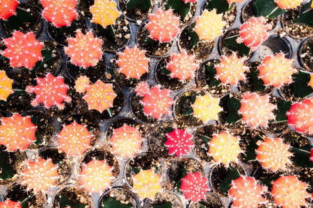 Farm cactus to plant variety of species Banco de Imagens - 124531657