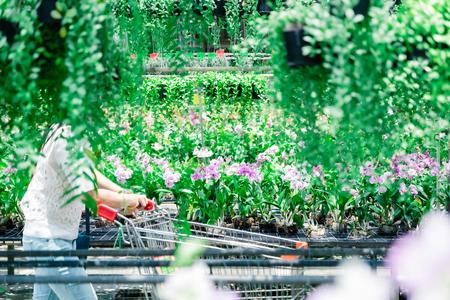 Shopping cart buy a tree farm sale market ecological preservation Banco de Imagens