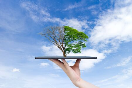 Recyclable environment human hands holding big plant tree on the tablet