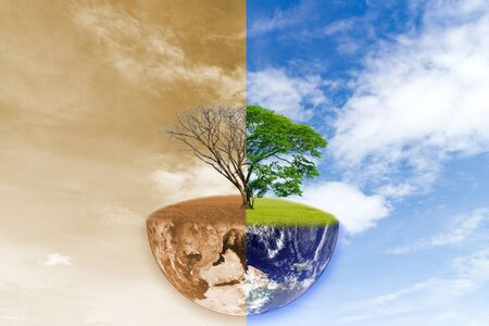 World climate change tree forest drought and forest refreshing