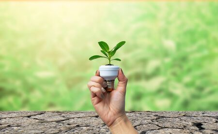 Ecology and Environment Tree in the light bulb Stock Photo - 138461086