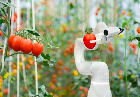 Smart robotic farmers tomato in agriculture futuristic robot automation to work to increase efficiency