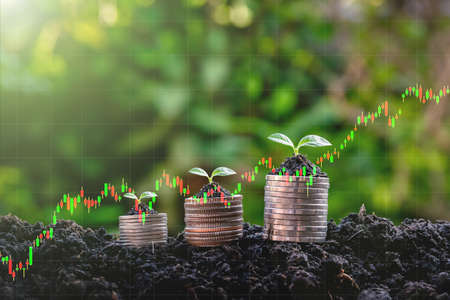 seedling on the money plant growth investment, profit from growing business concept 스톡 콘텐츠