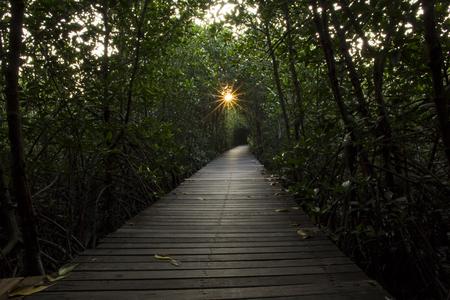 Wooden Bridge in Mangrove Forest at Laem Phak Bia, Phetchaburi, Thailand Stock fotó - 92134455
