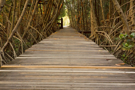 Wooden Bridge in Mangrove Forest at Laem Phak Bia, Phetchaburi, Thailand
