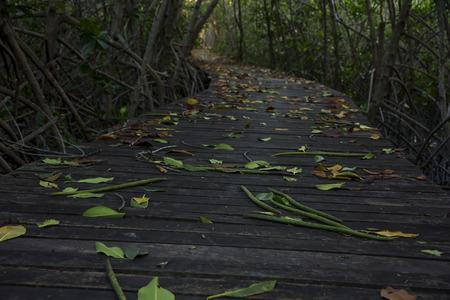 Wooden Bridge in Mangrove Forest at Laem Phak Bia, Phetchaburi, Thailand