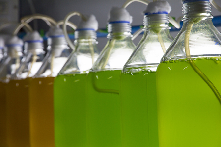 Marine plankton culture with light and oxygen in Scientific laboratory