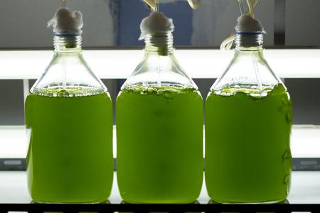 Culture de plancton marin (Chlorella sp.) Avec lumière et oxygène en laboratoire scientifique