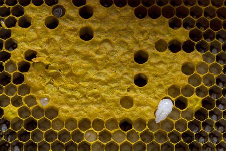 Closeup view of the working bees on honeycomb, Honey cells pattern, BeekeepingHoneycomb texture. Reklamní fotografie - 107199464