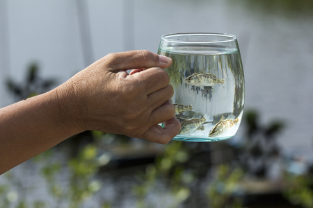 Soft focus of Giant Perch, Sea Bass, White Sea Bass (Lates calcarifer) in a glass. A fish hatchery in Thailand.