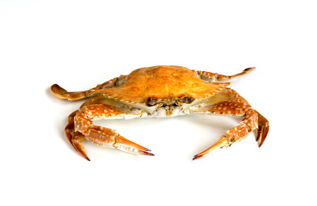 Steamed blue swimming crab, Flower crab, Blue crab (Portunus pelagicus) isolated on white background, Thai style food. Stockfoto