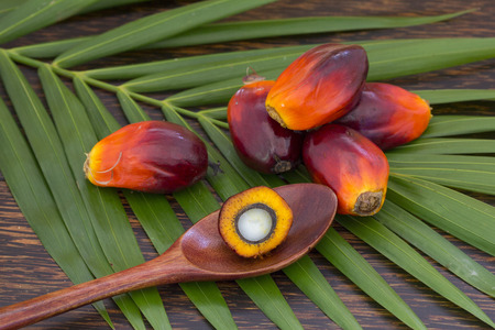 Close up of Palm Oil fruits (Elaeis guineensis) with cooking oil and palm leaf on a wooden background, Thailand.