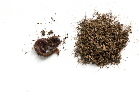 African Night Crawler (Eudrilus eugeniae), earthworms  and Fertile soil isolated on white background. Banque d'images