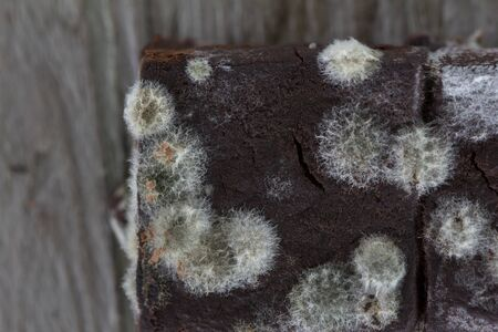 Close up of mold growing on Chocolate cake in green and white spores top view on black wood background, bread mold.