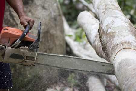 Close up of professional chain saw cuts woods, Chainsaw sawn a timber.