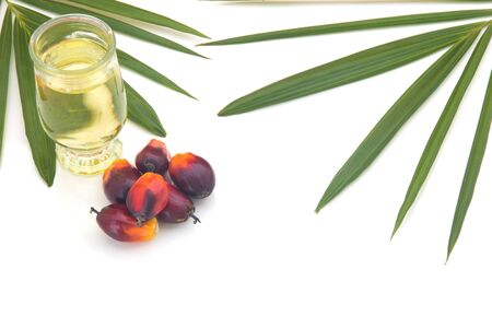 Red Oil Palm seed and leaf with cooking palm oil in glass on white background. Palm oil can be processed for food industry and produce energy and important agriculture economy in tropical Asia
