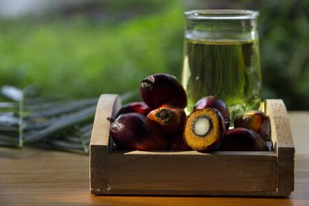 Red Oil Palm seed in a basket and cooking palm oil in glass with morning sunlight on garden background, processed for food industry and produce energy important agriculture economy in tropical Asia Imagens