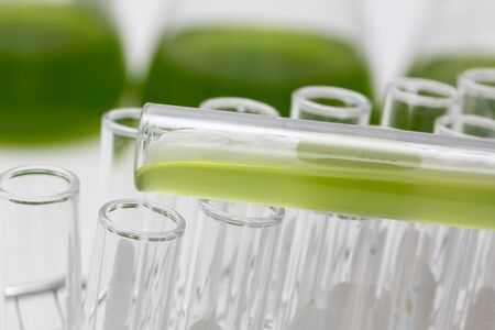Marine plankton or Microalgae culture into a test tube in laboratory, Green algae or phytoplankton can produce biofuel industry, Algae fuel, food, industries or biotechnology is developing sustainably Foto de archivo