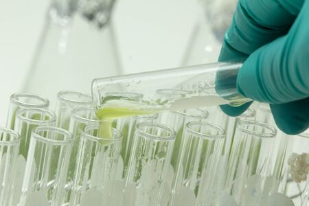 Marine plankton or Microalgae culture into a test tube in laboratory, Green algae or phytoplankton can produce biofuel industry, Algae fuel, food, industries or biotechnology is developing sustainably Stock Photo