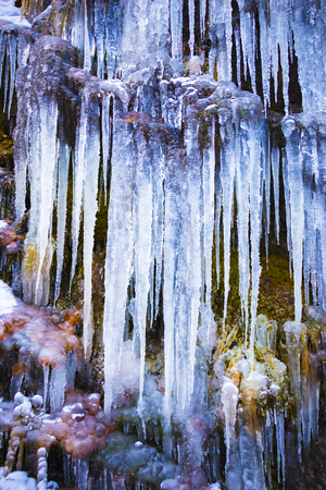 Frozen icicles in the wild river