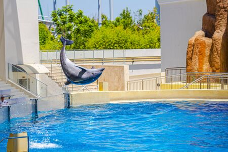 Dolphin in the air