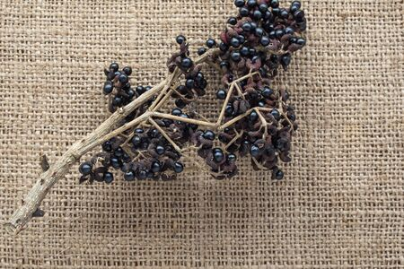spice in local market northern Thailand, Aanthoxylum acanthopodium DC. placed on burlap