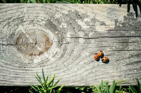 fence: Ladybugs on wooden fence