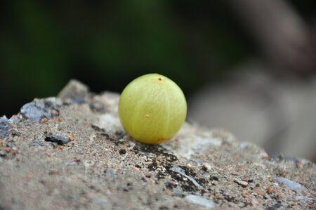 acidic: Sour fruit