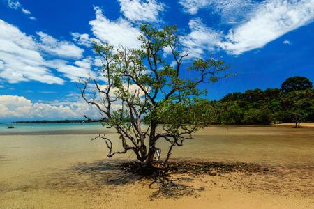 trat: Big tree in the sea at Koh Mak, Trat, Thailand.
