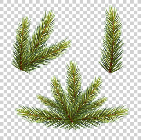 Spruce branch with cones. Vector illustration, isolated on transparent background. Suitable for creating Christmas cards, New Year. vector