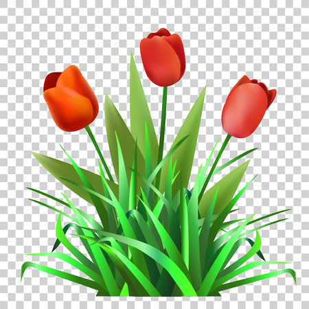 Green grass with tulips. Flowers. Nature.Vector 向量圖像