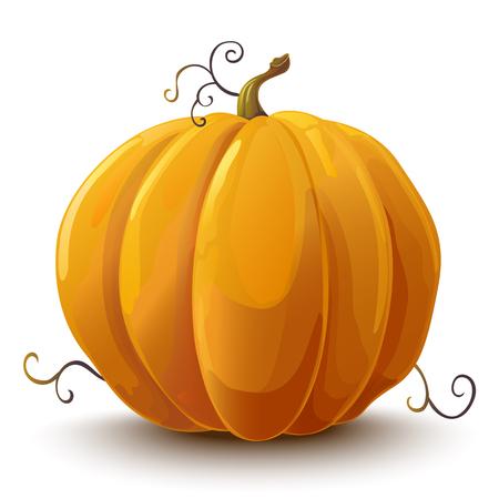 Pumpkin. Vegetable. Vector illustration