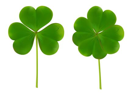 clover four leaf for Saint Patrick Day vector illustration isolated on white background. 向量圖像