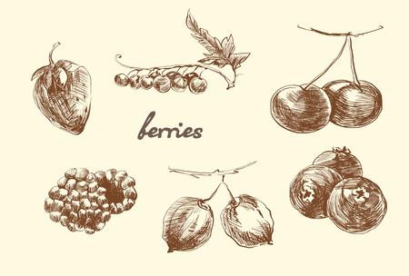 Set of berries. Sketch. Pencil drawing. Vector 向量圖像