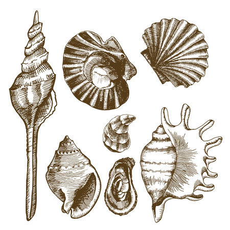 Sea set with seashells, mussels and mollusks. Vector