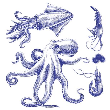 Sea set with octopus, squid, shrimps. Vector Ilustração