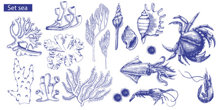 Set of marine inhabitants and corals.