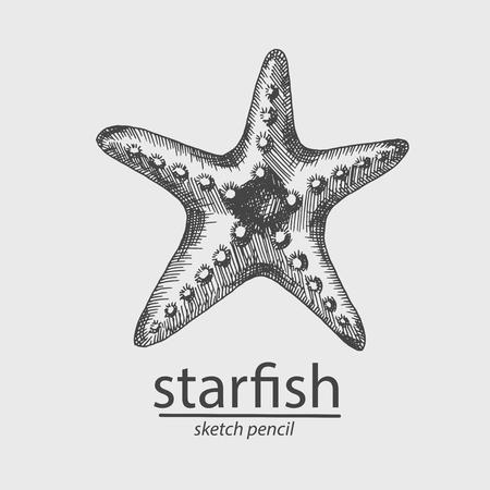 Starfish. Animal. A marine resident. Sketch Style. Vector 向量圖像