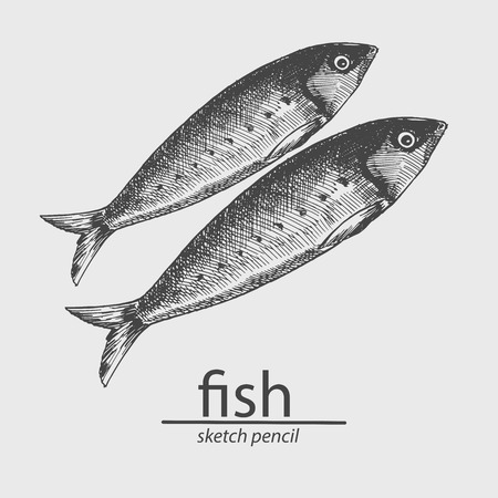 Fish. A marine resident. Animal. Sketch style. Drawing by hand. Vector illustration.